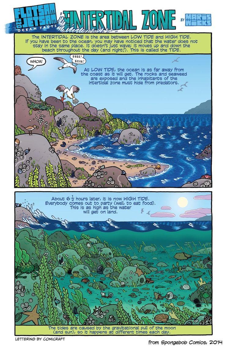 The Intertidal Zone (Spongebob Comics)