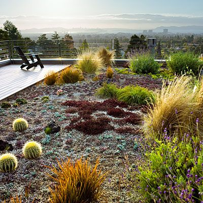 These unthirsty succulents, flowers, and grasses thrive with little care in a rooftop garden. The roof belongs to the much-lauded Margarido House, the first residence in Northern California to earn LEED-H Platinum certification.