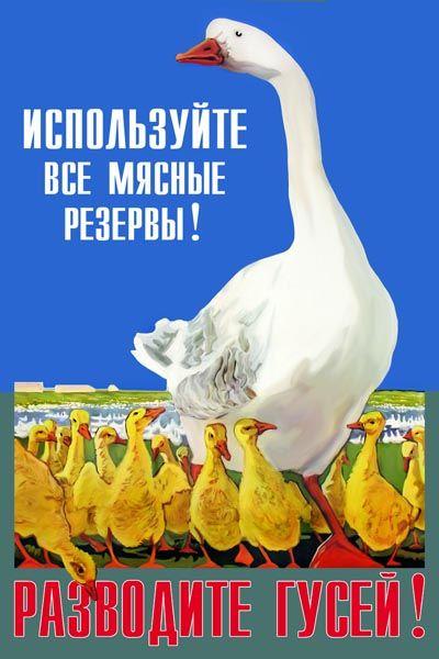 1076. Советский плакат: Используйте все мясные резервы! Разводите гусей!