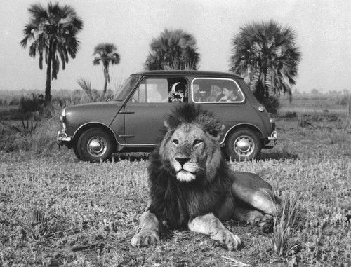 Memories of a visit in the 60's to Gorongosa National Park (Mozambique)