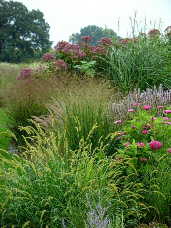 491 best images about ornamental grasses siergrassen on for Purple grasses for landscaping