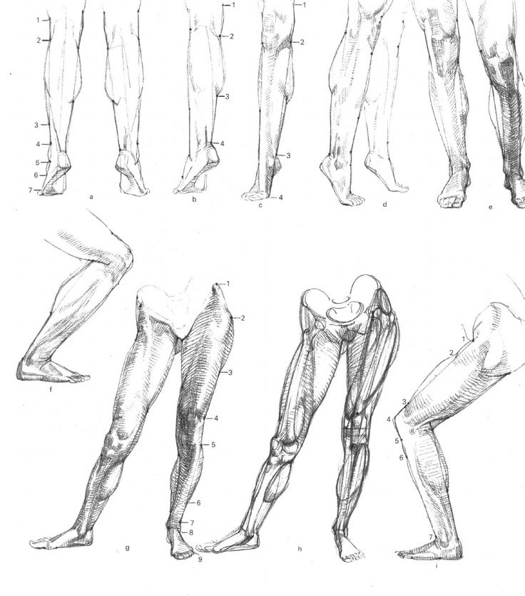 967 best Drawing ANATOMY images on Pinterest   Anatomy reference ...
