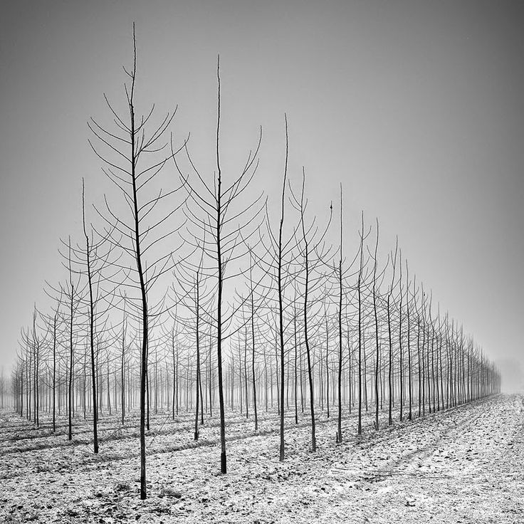 design-dautore.com: Tree Photography by Pierre Pellegrini