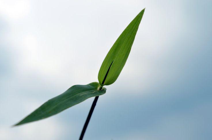 A Little Life Nature Photography by azayaka-eizan.deviantart.com on @DeviantArt