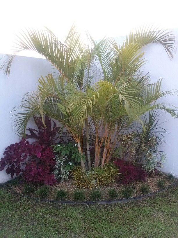 Jardin de esquina con multiples colores de plantas for Plantas para decoracion de jardines