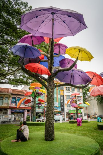 The colorful umbrella trees in Singapore's Little India.  Since Singapore is located in a tropical rainforest climate, getting 92 inches of rain every year you need to shelter from the rain quite often.  Stroll down Hindoo Road in Singapore's Little India and sit beneath on of the neighborhood's unique Umbrella Trees.