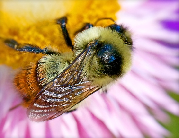 Place to bee :)