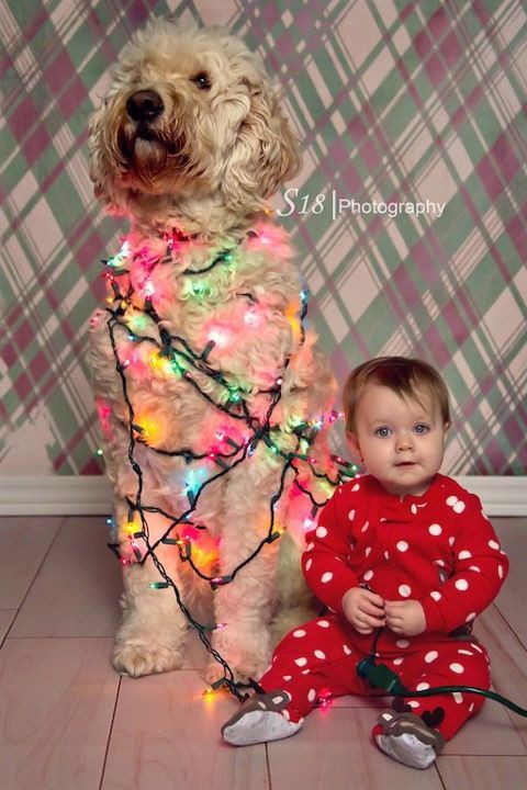 Dog & Christmas Lights-I think we need to recreate this for our 2013 Christmas cards!