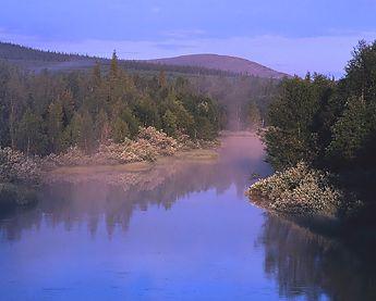 Nature of Pallas-Yllästuntiri National Park