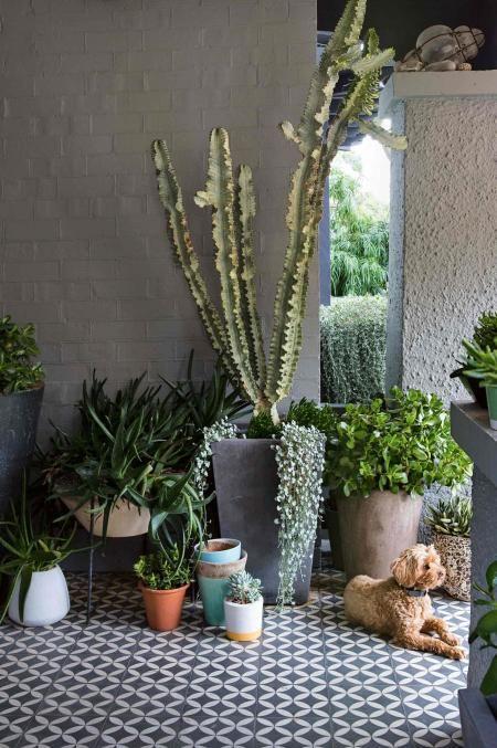 Peter Fudge pot-plants-dog-apr15
