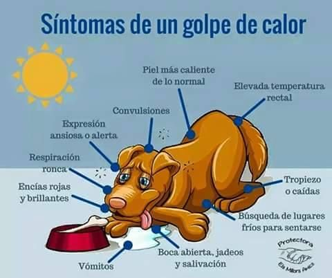 Síntomas de un golpe de #calor (#perro)