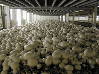 Small Business Ideas | List Of Small Business Ideas: How to Grow Mushrooms for Profit