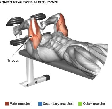 TRICEPS -  LYING DUMBBELL TRICEP EXTENSION                                                                                                                                                      Plus