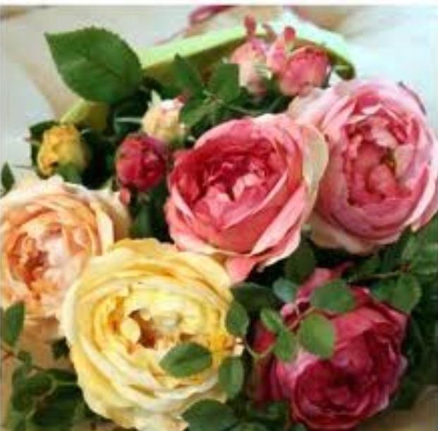 les 54 meilleures images du tableau roses anciennes sur pinterest ancien roses roses et. Black Bedroom Furniture Sets. Home Design Ideas