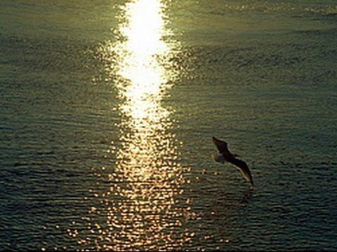 Утренняя прогулка после дождя Приморский край Находка Врангель