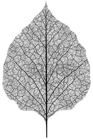 manually drawn leaf skeleton. Eps8 vector