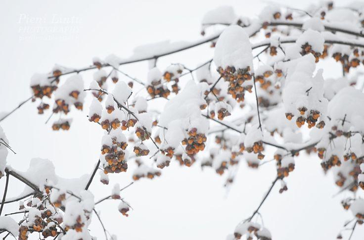 http://pienilintu.blogspot.fi/2018/01/talven-ihmemaa-makrotex.html