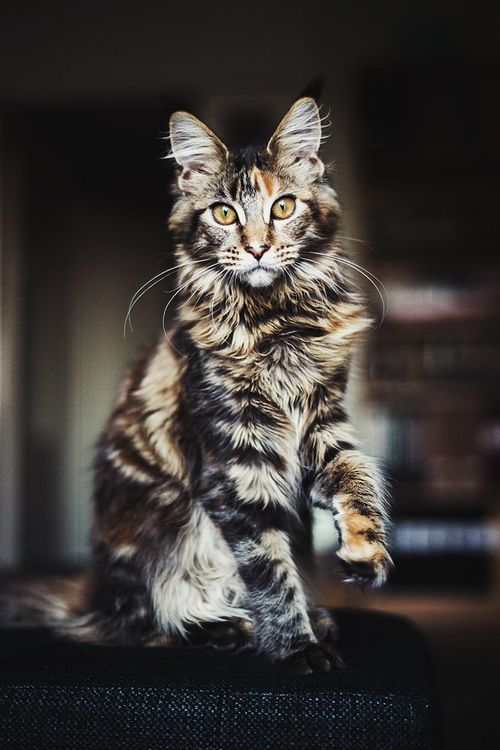 I love the markings on this cat!