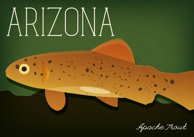 91 best images about arizona on pinterest temples for Best fishing in arizona