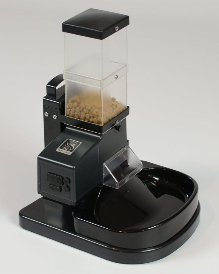 30 Best Best Automatic Cat Feeders Images On Pinterest