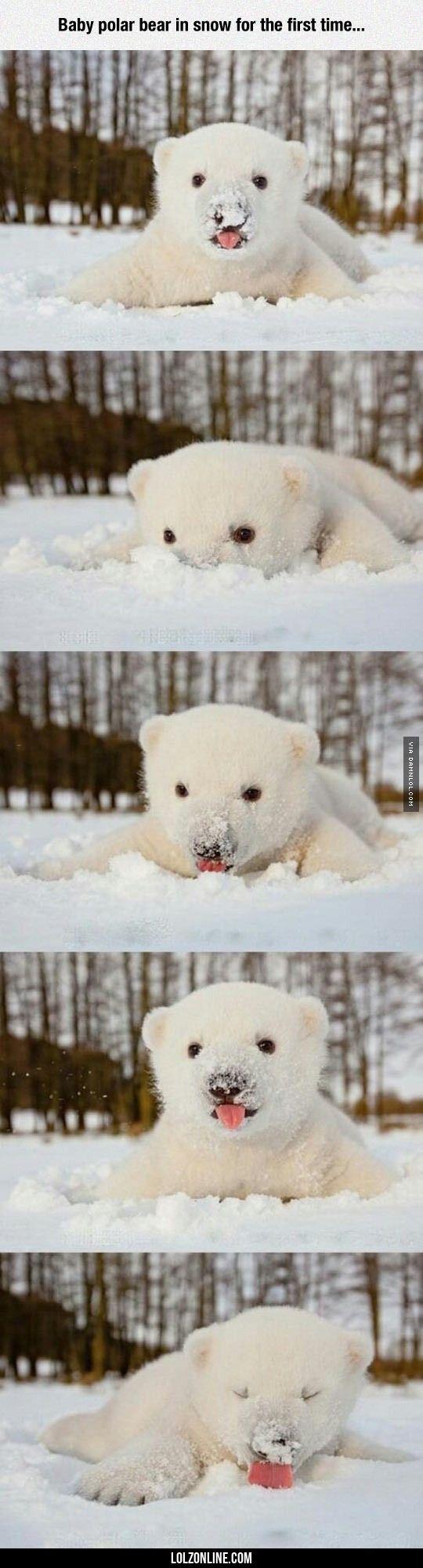 Enjoying The Snow#funny #lol #lolzonline