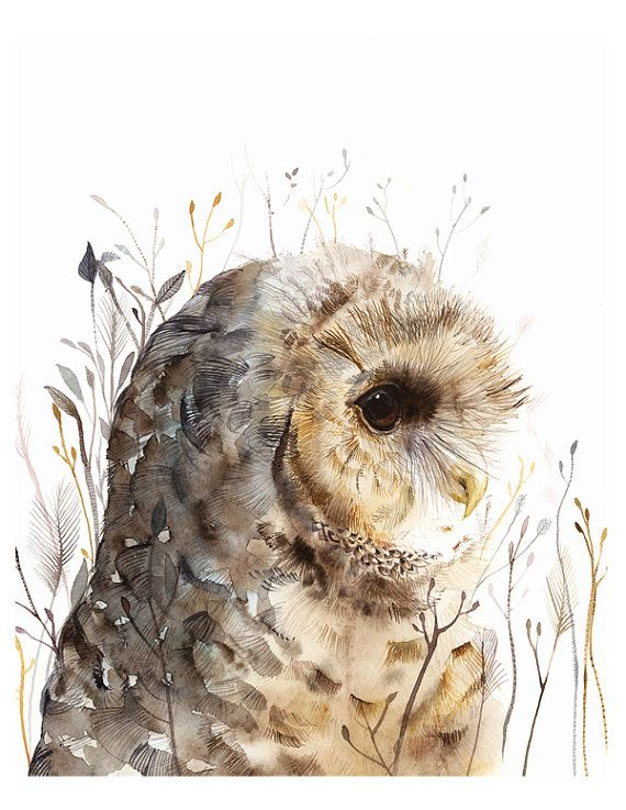 watercolor painting Owl art Spotted Owl large by amberalexander, $35.00