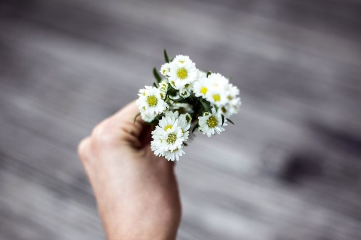 New free stock photo of hand flowers macro   Download it on Pexels