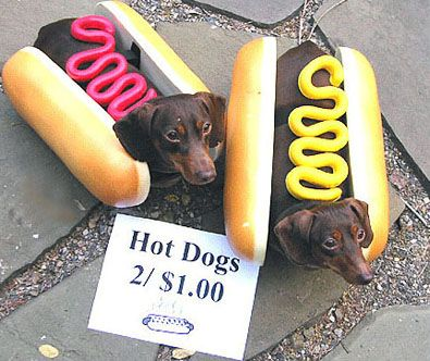 Happy Halloweenie Hot Dog Zucchini! Food Costumes for dogs #halloween #holiday