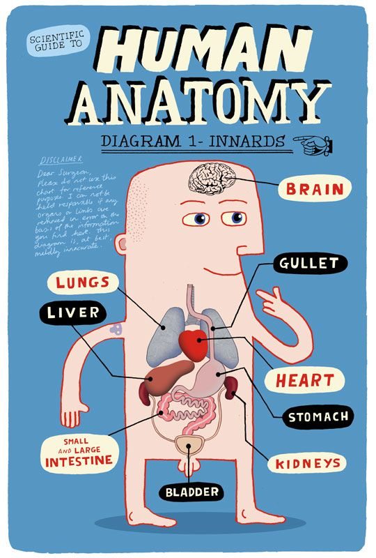 Medical Illustration - Allan Sanders : illustrator