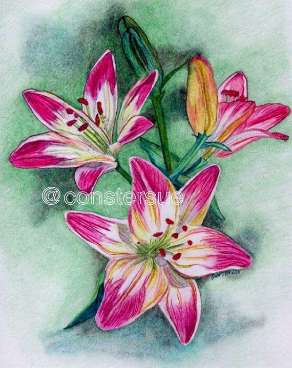35 Beautiful Flower Drawings and Realistic Color Pencil Drawings | Read full article: http://webneel.com/flower-drawings | more http://webneel.com/drawings | Follow us www.pinterest.com/webneel