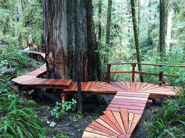 Rainforest boardwalk hike