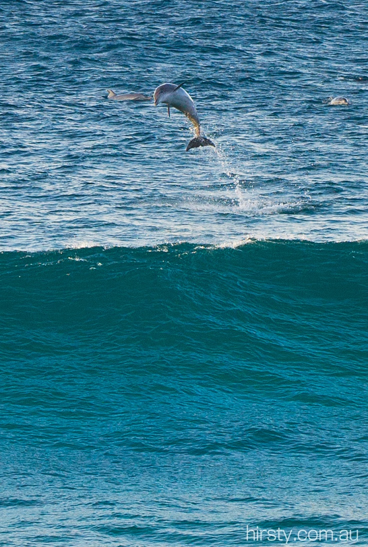 101 best dolphins images on pinterest ocean life dolphins and