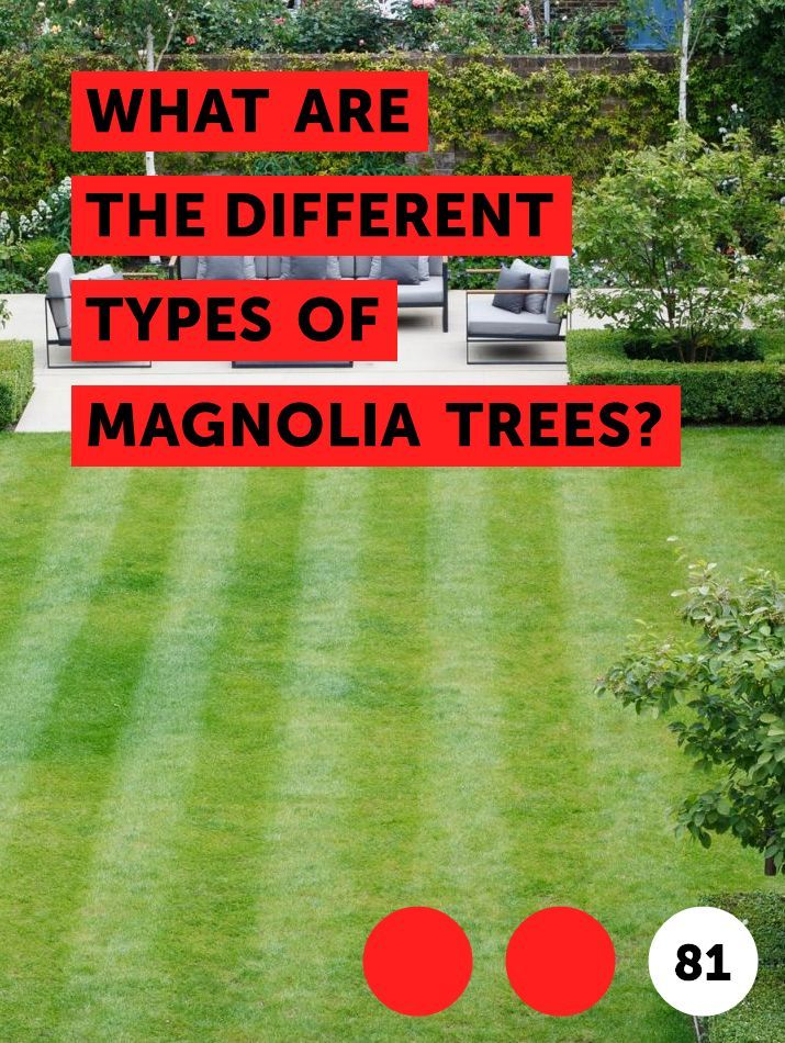 What Are The Different Types Of Magnolia Trees Trees Magnolia