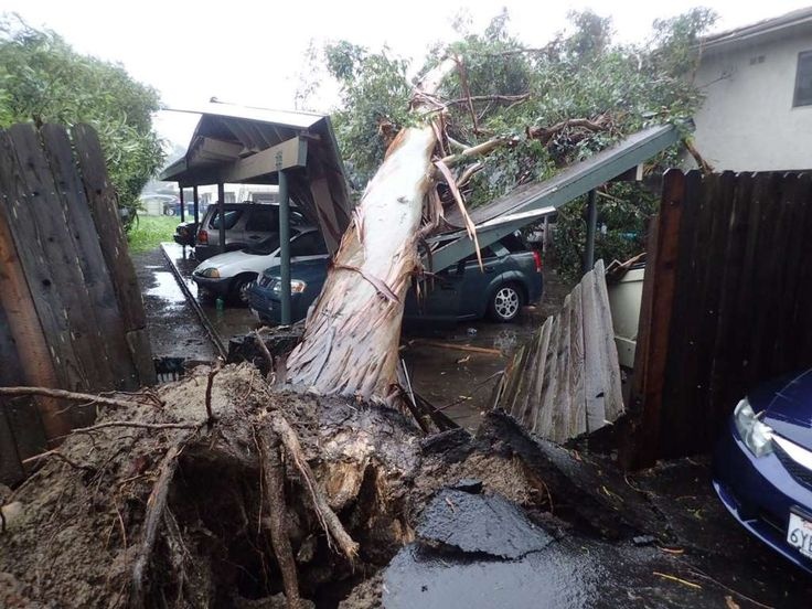 California storms:     A large eucalyptus tree toppled onto a carport, damaging vehicles in Goleta, Calif., Friday, Feb. 17, 2017. A powerful Pacific storm blew into southern and central California on Friday, unleashing wind‐driven heavy rains that forecasters said could become the strongest in years if not decades.