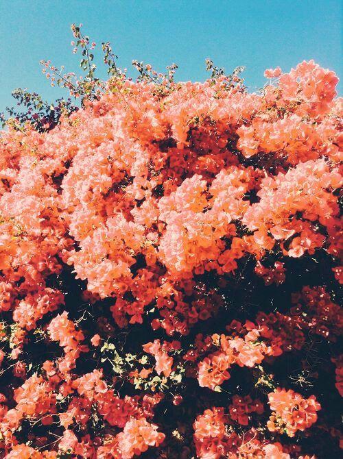 Bright Flowers!