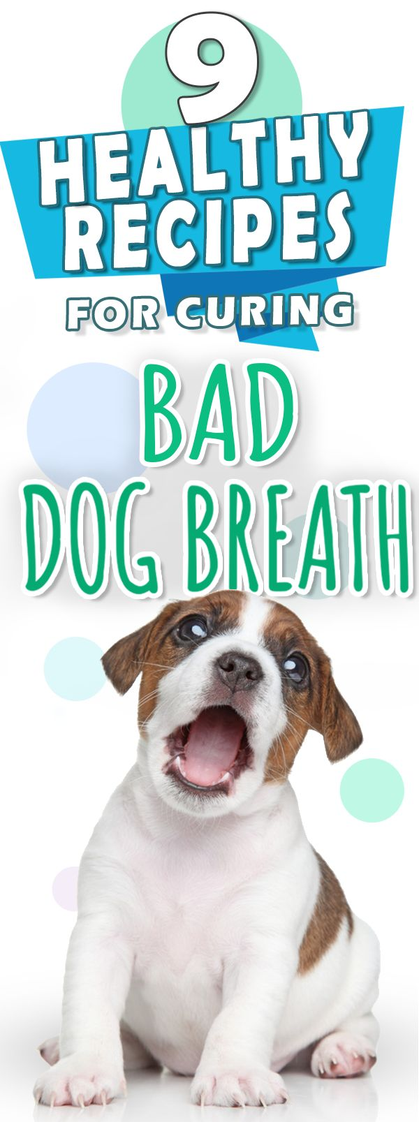 How do you remedy bad dog breath? Simple - with a few super easy dog treat recipes that are healthy and freshen up their breath!