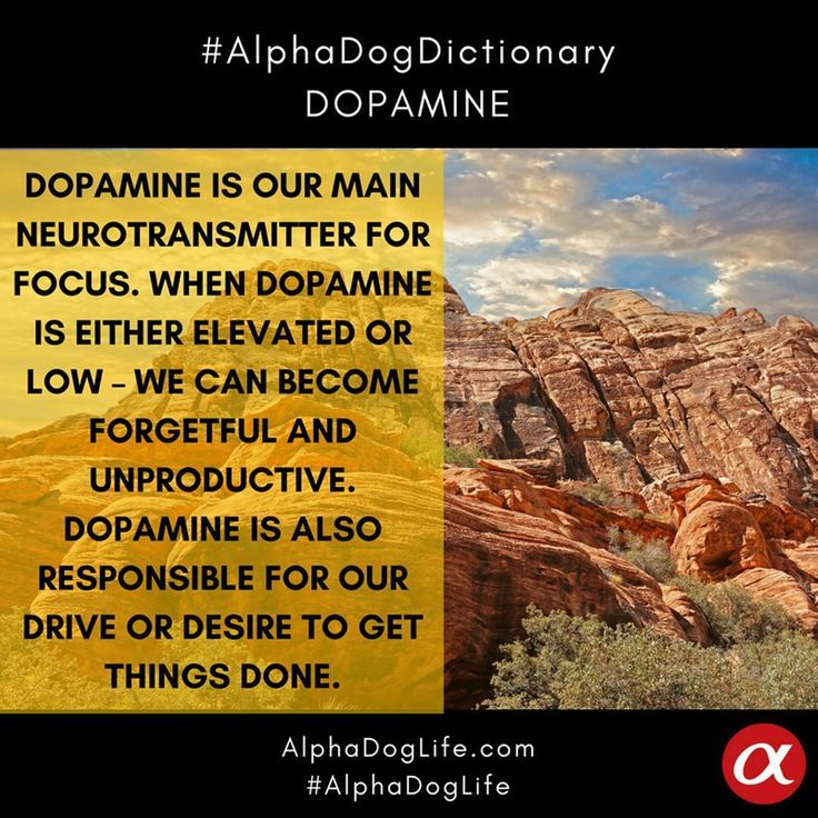 #DOPAMINE is our main #focus #neurotransmitter. When dopamine is either elevated or low – we can have focus issues such as not remembering where we put our keys, forgetting what a paragraph said when we just finished reading it or simply #daydreaming and not being able to stay on task. Dopamine is also responsible for our #drive or #desire to get things done – or #motivation. #AlphaDogDictionary #WordOfTheDay #AlphaDogLife