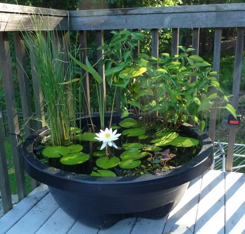 76 best images about container ponds ponds in a pot on for Pond in a pot ideas