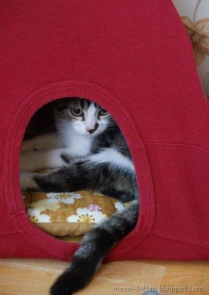 1 vieux t-shirt + 2 cintres + un bout de carton et un coussin = une tente pour chat