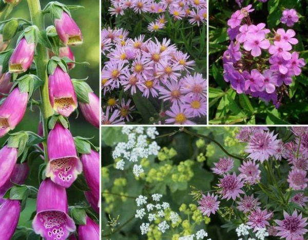 Plantes Vivaces Invitez La Couleur Au Jardin Plante Vivace