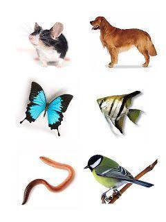 zvieratá a ich domov