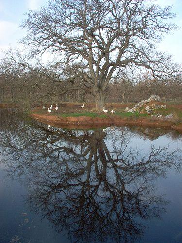 Spring lake in Kouri, Magnesia, 7 am.