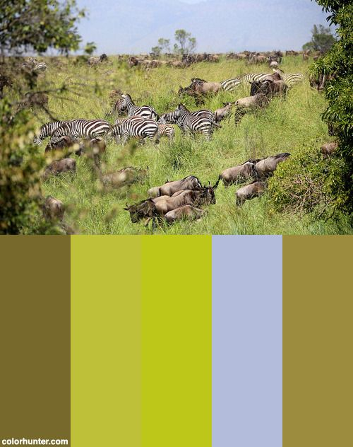 The Great Migration Color Scheme From Colorhunter Com