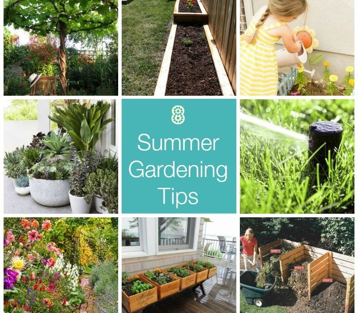 17 best images about summer gardening tips on pinterest gardens raised gardens and garden pallet - Summer time gardening tips ...