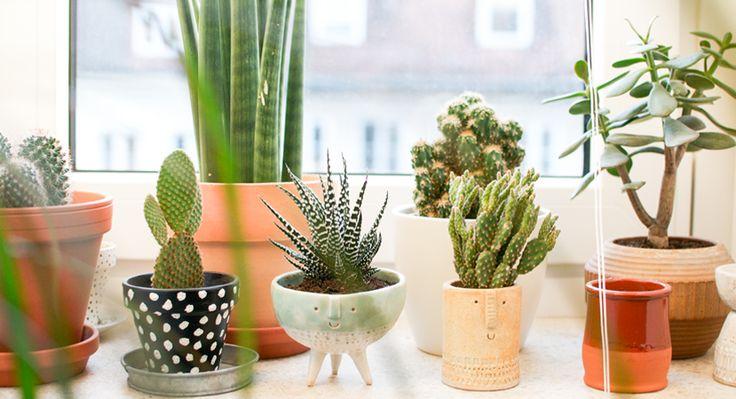 Ber ideen zu hipster wohnung auf pinterest for Wohnung pflanzen