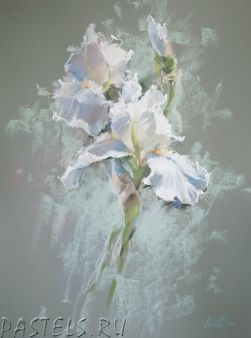 Olga Abramova. White iris.