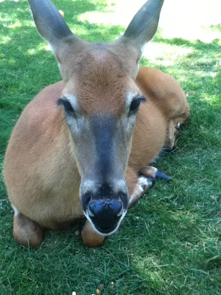 At fawn-doe-rosa in Wisconsin,USA, the deer let you lay by them and they have bunnies to pick up and pet!!!! It is a fun place to go for all ages!!!
