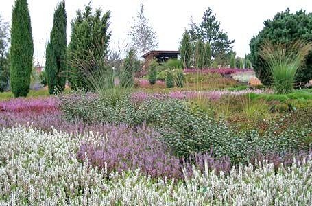 Heidegarten: Gestaltung und Pflege - Mein schöner Garten