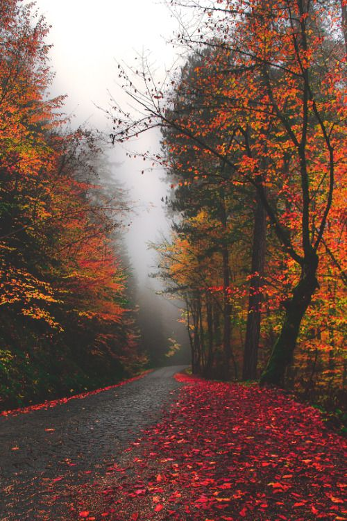 "Seasonsprincess: "" Crisp-season: "" Autumn Leaves~haunted"
