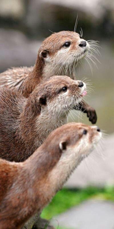 Love that little pick tongue, so cute!
